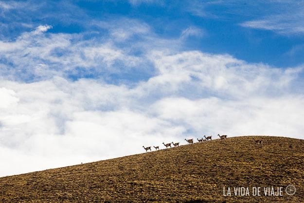 hasta luego patagonia-la vida de viaje (23 de 50)