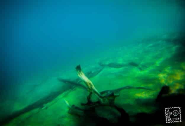 LVDV-el lago te come (7)