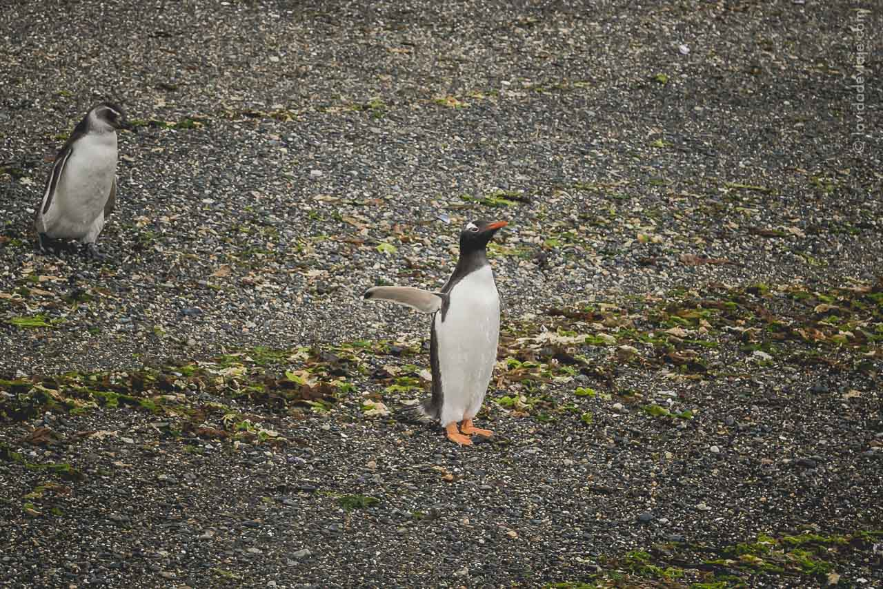 Aventura en Ushuaia - Navegar en barco el Canal Beagle