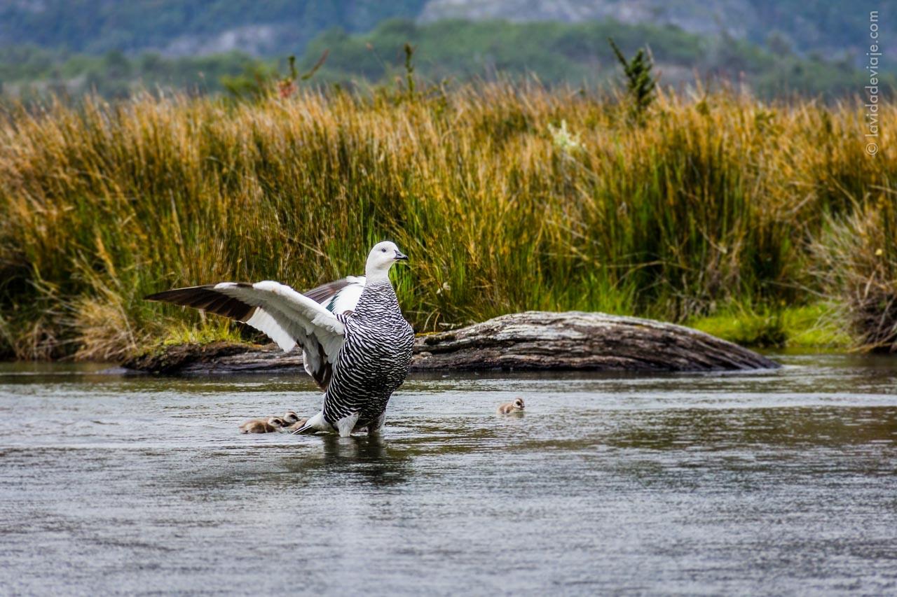 Aventura en Ushuaia - Parque Nacional Tierra del Fuego