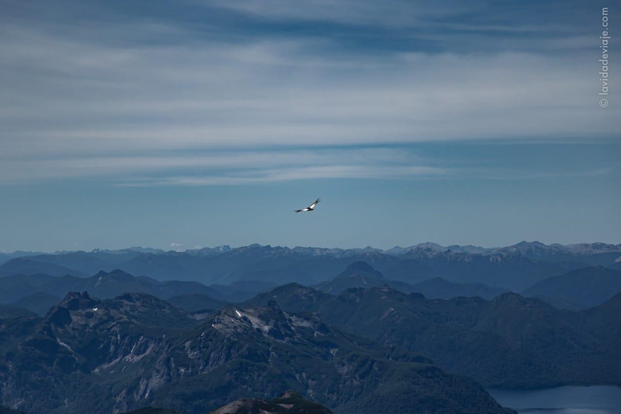 Cóndor volando en el volcán Lanín